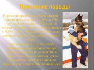 Признание породы Порода сибирский хаски была признана Американским кеннел-клу