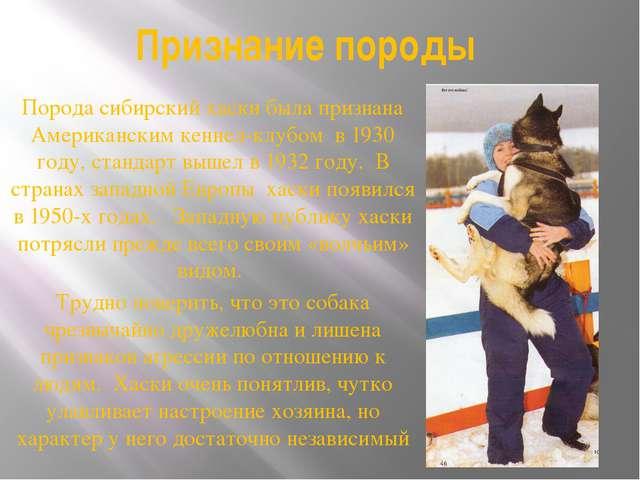 Признание породы Порода сибирский хаски была признана Американским кеннел-клу...