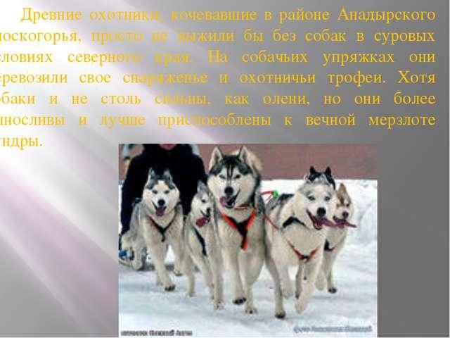 Древние охотники, кочевавшие в районе Анадырского плоскогорья, просто не выж...