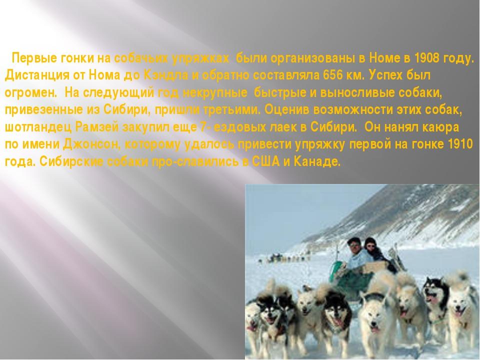 Первые гонки на собачьих упряжках были организованы в Номе в 1908 году. Дист...