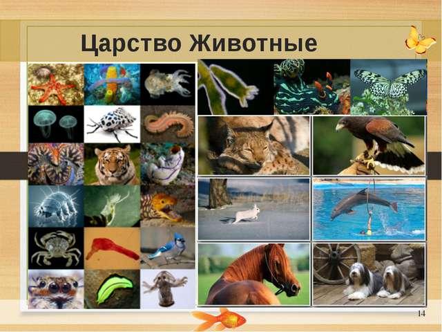 * Царство Животные