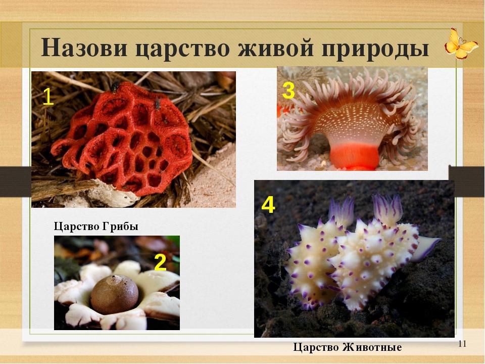 * Назови царство живой природы Царство Грибы Царство Животные 1 2 3 4