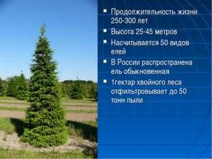 Продолжительность жизни 250-300 лет Высота 25-45 метров Насчитывается 50 видо