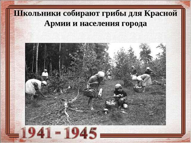 Школьники собирают грибы для Красной Армии и населения города