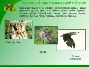 Ушастая сова Орлан-белохвост Животный мир Саратовской области Около 330 видов