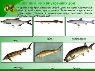 Животный мир внутренних вод Издавна наш край славился рыбой, даже на гербе С