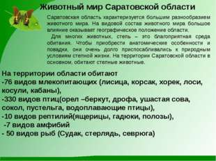 Животный мир Саратовской области Саратовская область характеризуется большим