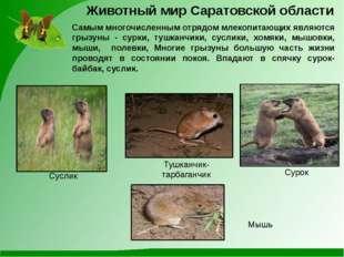 Самым многочисленным отрядом млекопитающих являются грызуны - сурки, тушканчи
