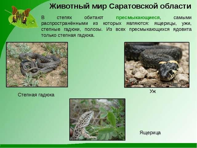 Уж Степная гадюка Ящерица Животный мир Саратовской области В степях обитают п...
