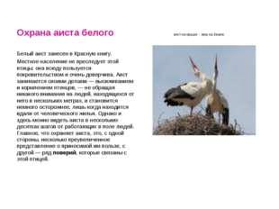 Охрана аиста белого аист на крыше - мир на Земле Белый аист занесен в Красную