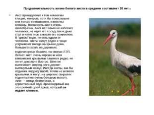 Продолжительность жизни белого аиста в среднем составляет 20 лет. Аист прина