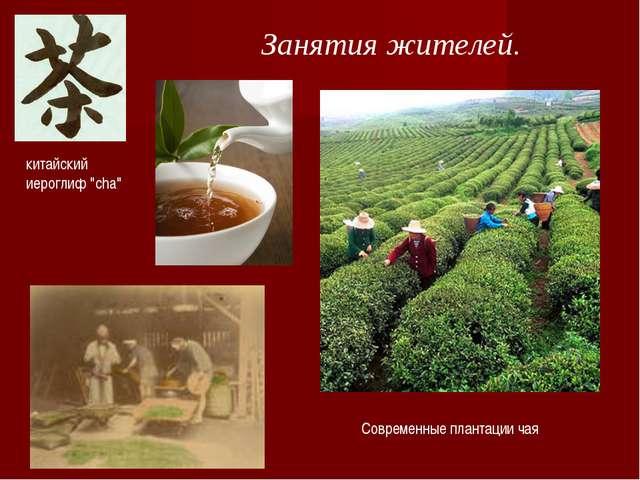 """Занятия жителей. китайский иероглиф """"cha"""" Современные плантации чая"""