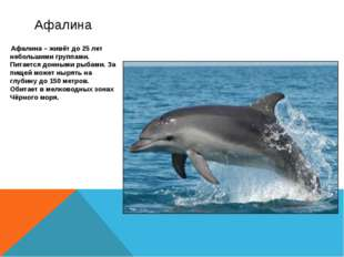 Афалина – живёт до 25 лет небольшими группами. Питается донными рыбами. За п