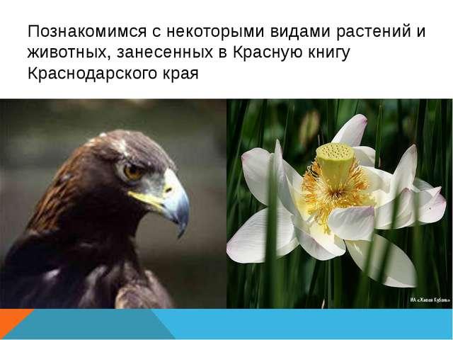 Познакомимся с некоторыми видами растений и животных, занесенных в Красную к...