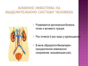 Развивается хроническая болезнь почек и мочевого пузыря. Рак почек(в 5 раз ча