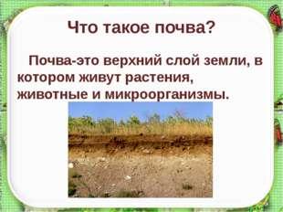 Что такое почва? Почва-это верхний слой земли, в котором живут растения, живо