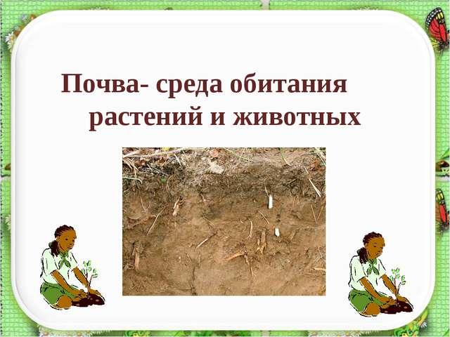 Почва- среда обитания растений и животных http://aida.ucoz.ru