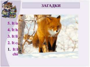 ЗАГАДКИ 5. It is a wild animal. 4. It lives in Russia. 3. It is brown. 2. It
