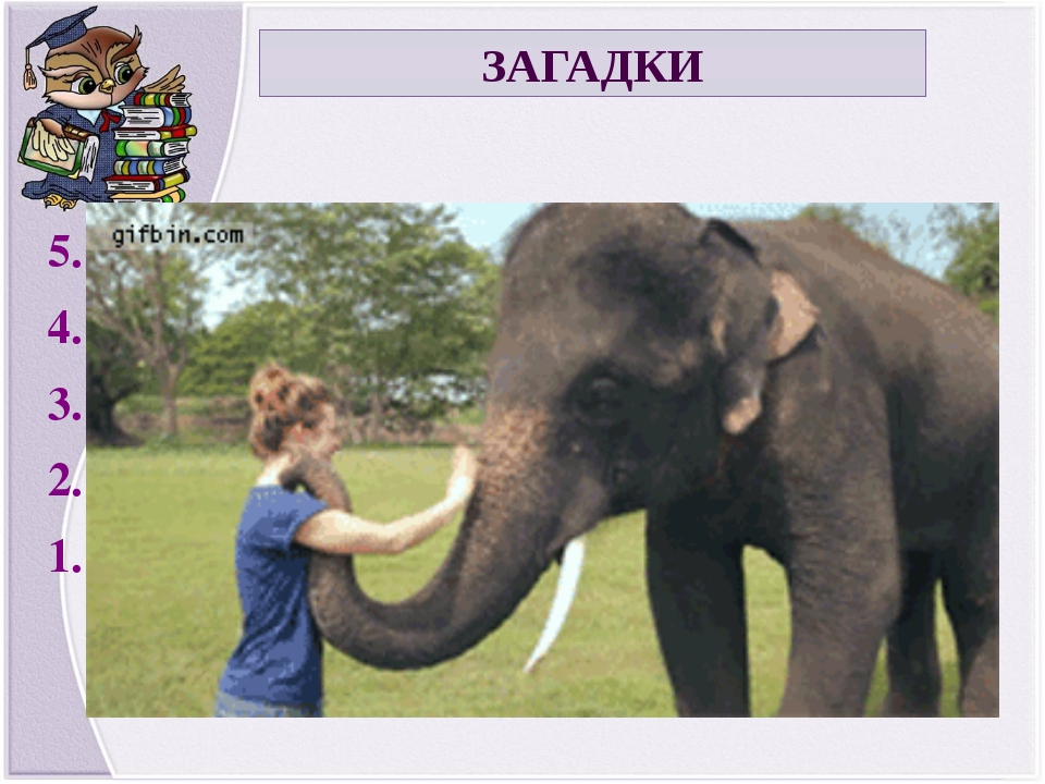 ЗАГАДКИ 5. It is a domestic animal. 4. It can be grey or brown, black or whit...