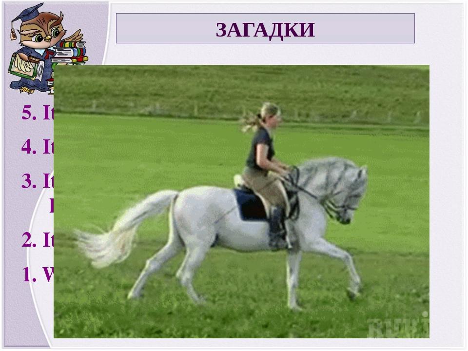 ЗАГАДКИ 5. It is a wild animal. 4. It has got a long tail. 3. It lives in the...