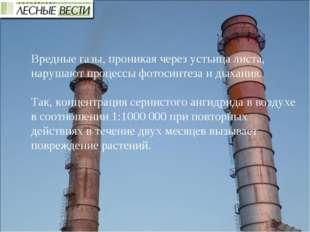Вредные газы, проникая через устьица листа, нарушают процессы фотосинтеза и д