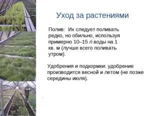 Уход за растениями Удобрения и подкормки:удобрение производится весной и ле