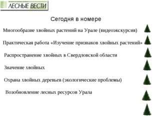 Сегодня в номере Многообразие хвойных растений на Урале (видеоэкскурсия) Прак
