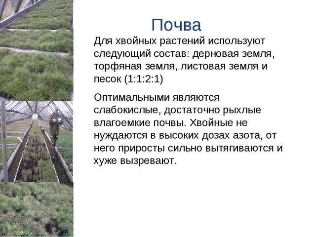 Почва Для хвойных растений используют следующий состав: дерновая земля, торфя...