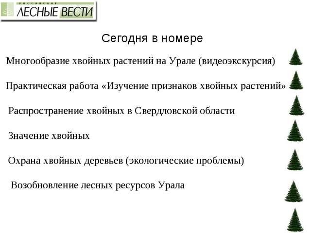 Сегодня в номере Многообразие хвойных растений на Урале (видеоэкскурсия) Прак...