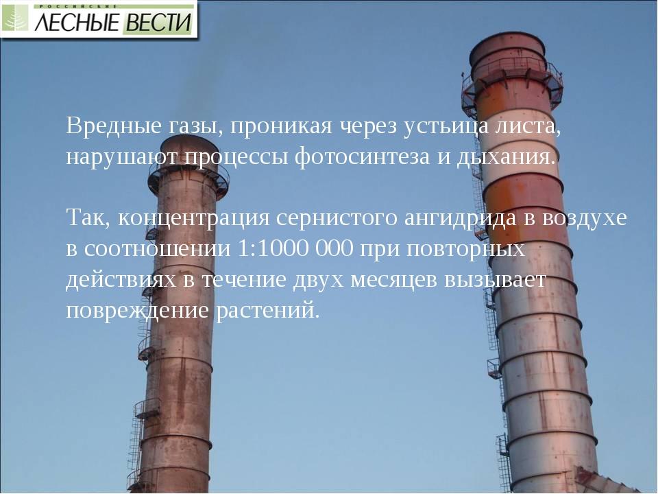 Вредные газы, проникая через устьица листа, нарушают процессы фотосинтеза и д...