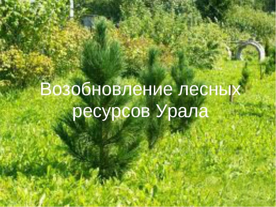 Возобновление лесных ресурсов Урала