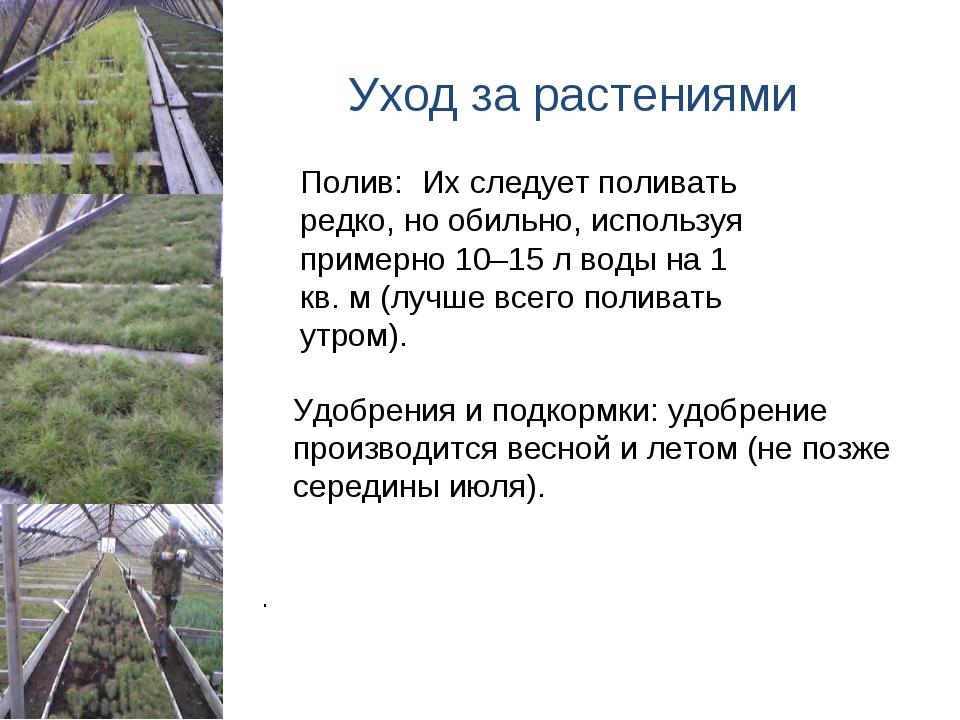 Уход за растениями Удобрения и подкормки:удобрение производится весной и ле...