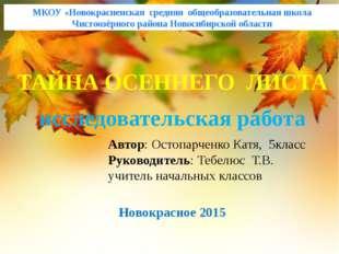 МКОУ «Новокрасненская средняя общеобразовательная школа Чистоозёрного района