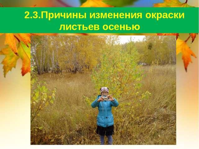 2.3.Причины изменения окраски листьев осенью