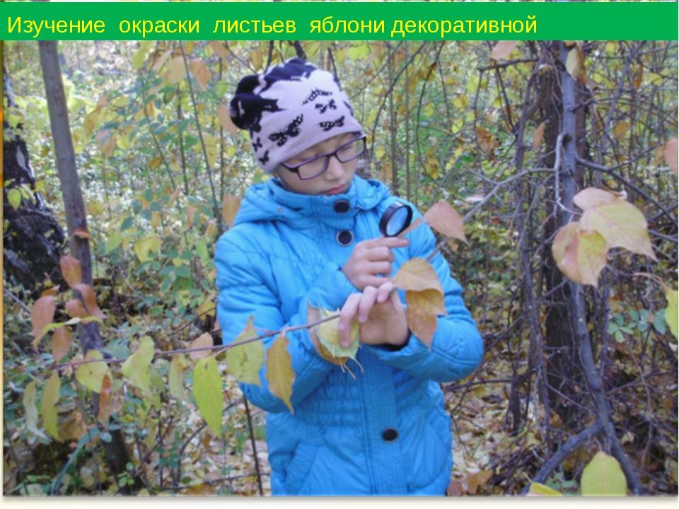Изучение окраски листьев яблони декоративной