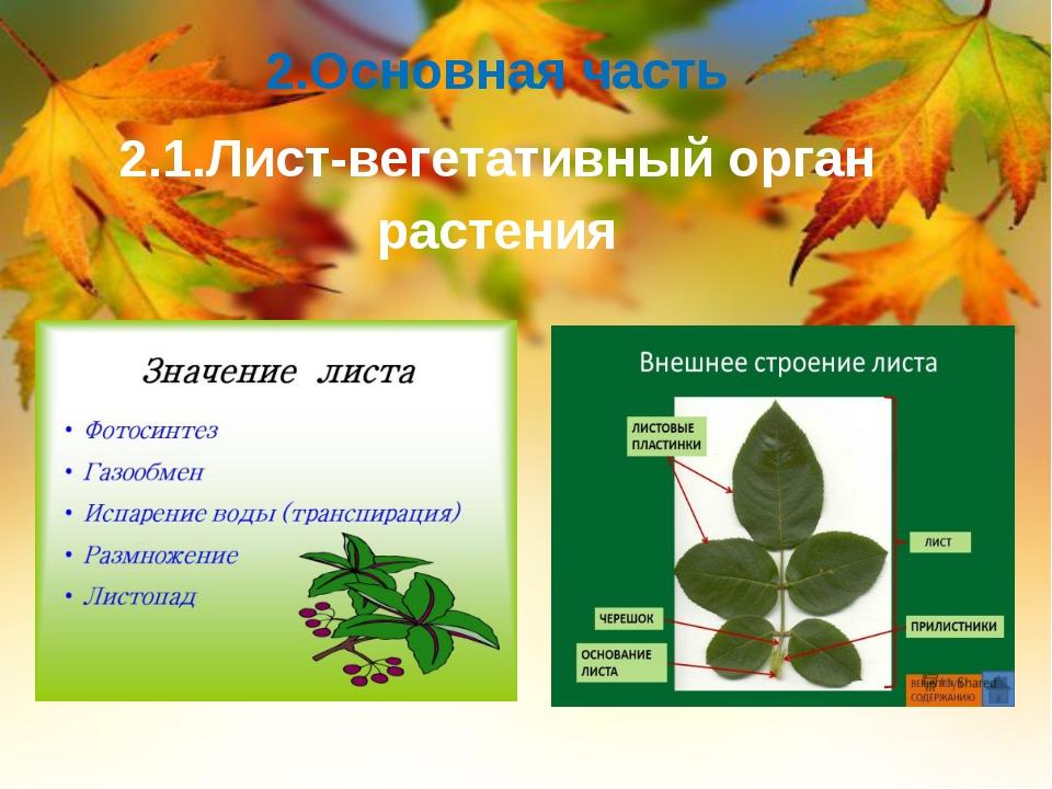 2.Основная часть 2.1.Лист-вегетативный орган растения