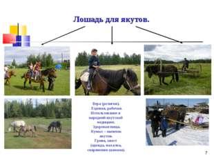 * Лошадь для якутов. Вера (религия). Ездовая, рабочая. Использование в народн