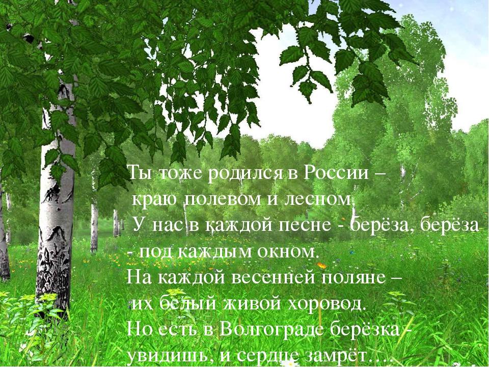 Ты тоже родился в России – краю полевом и лесном. У нас в каждой песне - бер...