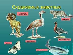 Охраняемые животные Путоранский снежный баран Аполлон Дрофа-красотка Снежный