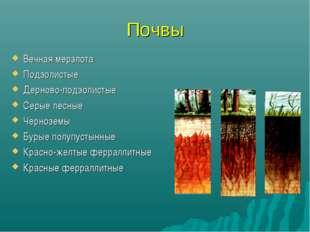 Почвы Вечная мерзлота Подзолистые Дерново-подзолистые Серые лесные Черноземы