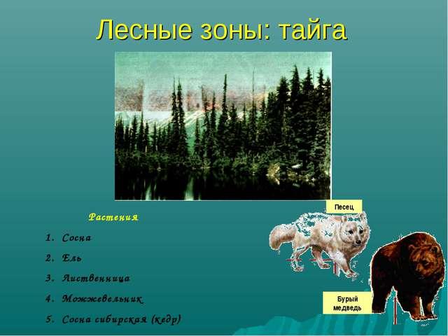Лесные зоны: тайга Растения Сосна Ель Лиственница Можжевельник Сосна сибирска...