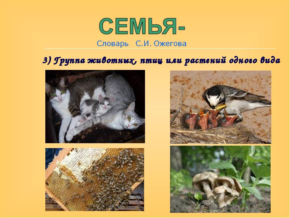 3) Группа животных, птиц или растений одного вида