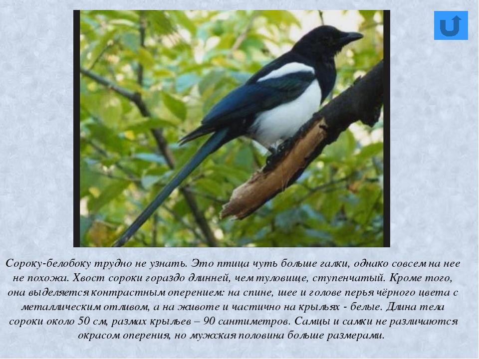 Пташечки проворные, Крылья желто-черные, Есть кружок у носика – Красное коле...