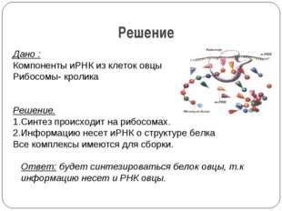 Решение Дано : Компоненты иРНК из клеток овцы Рибосомы- кролика   Решение.