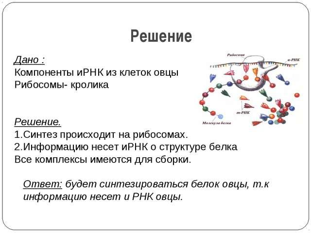 Решение Дано : Компоненты иРНК из клеток овцы Рибосомы- кролика   Решение....