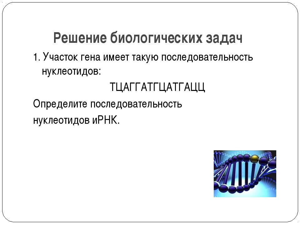 Решение биологических задач 1. Участок гена имеет такую последовательность ну...
