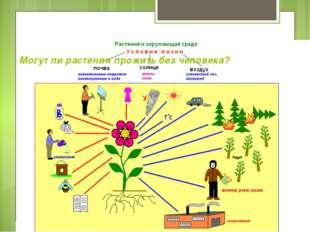 Могут ли растения прожить без человека?