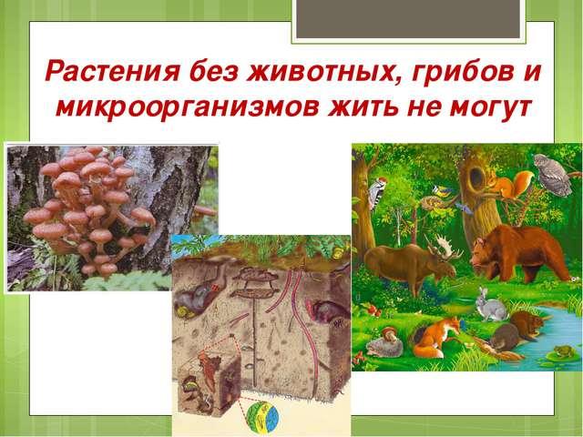 Растения без животных, грибов и микроорганизмов жить не могут