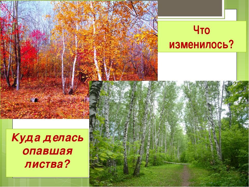 Что изменилось? Куда делась опавшая листва?