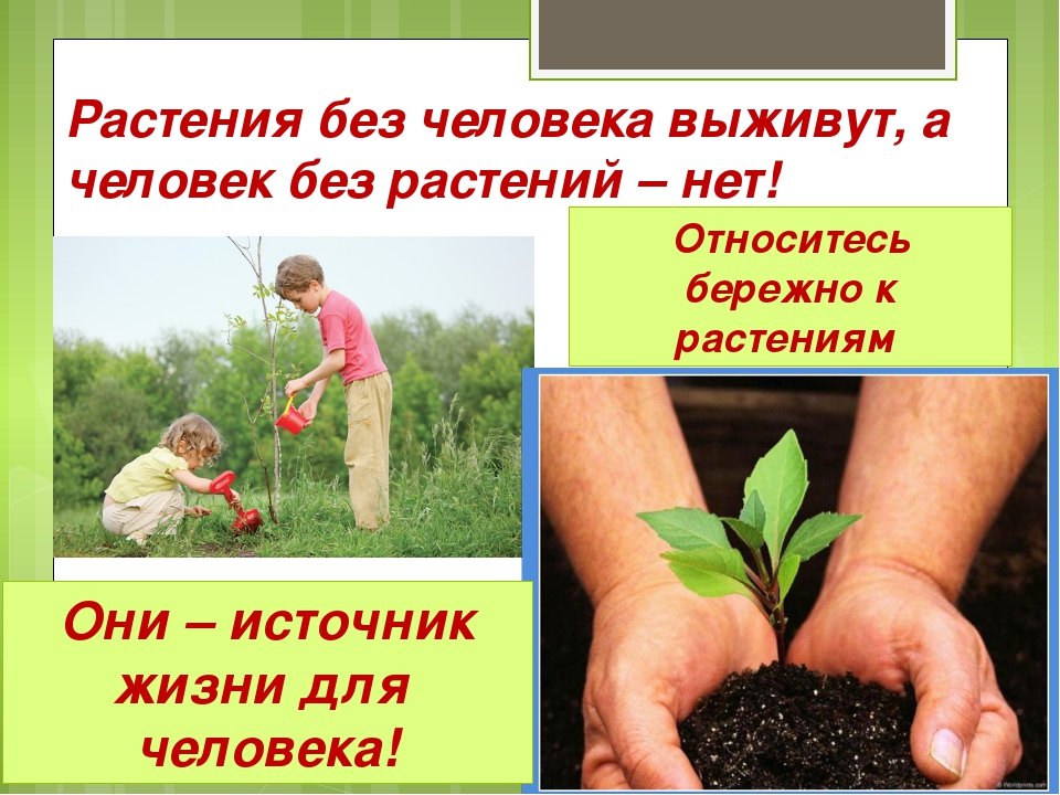 Растения без человека выживут, а человек без растений – нет! Относитесь береж...